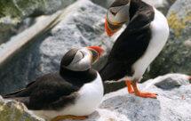 National Geographic. Мир дикой природы - Открытый океан (World Of The Wild - Open Ocean)