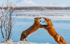 National Geographic. Мир дикой природы — 1 серия
