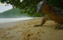 National Geographic. Дикая Индонезия - Остров монстров (Wild Indonesia - Islands Of Monsters)