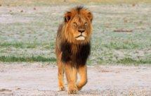 National Geographic. Африканские охотники - Молодняк (Africa's Hunters - Teenage Pride)