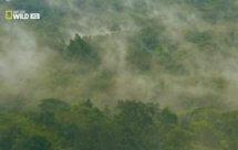National Geographic. Дикая Индонезия - Потерянные миры Папуа (Wild Indonesia - Papua's Lost Worlds)