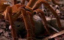 National Geographic. Самые опасные животные мира - Челюсти и грехи: ещё больше смертных пороков (World's Deadliest Animals - More 7 Deadly Sins)