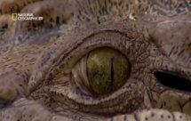National Geographic. Самые опасные животные мира - Наиболее опасные обитатели Азии (World's Deadliest Animals - Asia - Land Of Extremes)