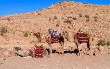 National Geographic. Пустынные земли на Ближнем Востоке - Дикий Египет (Desert Lands Of The Middle East - Wild Egypt)