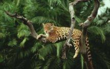 National Geographic. Дикая Бразилия - Жемчужины леса (Wildes Brasilien - Das wilde herz)