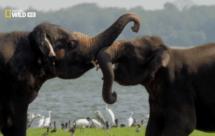 National Geographic. Дикая Шри Ланка - Побережье гигантов (Wild Sri Lanka - Coast of Giants)