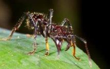 National Geographic. Самые опасные животные мира - Супер способности хищников (World's Deadliest Animals - Predator Superpowers)