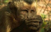 National Geographic. Дикая Бразилия - Логово ягуара (Wildes Brasilien - Die wasserwelt des Pantanal)