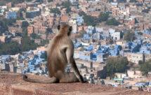 National Geographic. Потерянные миры Индии - Рай Киплинга (India's Lost Worlds - Kipling's Paradise)