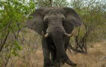 National Geographic. В объективе: Необычное поведение животных - Звериные причуды (Caught In The Act -  Beast Fads)