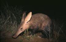 National Geographic. В объективе: Необычное поведение животных - Странные выходки (Caught In The Act - Strange tricks)