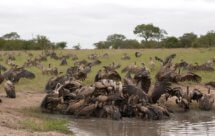 National Geographic. В объективе: Необычное поведение животных - В атаку! (Caught In The Act -  Fight!)