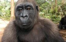 National Geographic. В объективе: Необычное поведение животных - Неожиданные противники (Caught In The Act - Unexpected opponents)