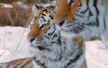 National Geographic. Самые опасные животные мира - Трансформеры (World's Deadliest Animals - Transformers)