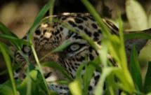 National Geographic. Дикая Бразилия - Тень орла (Wildes Brasilien - Die fluten des Amazonas)