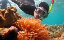 National Geographic. Жизнь на Большом Барьерном рифе - Сохранить и приумножить (Life on the reef - Save and increase)