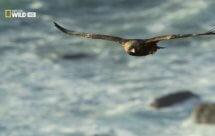 National Geographic. Дикая Шотландия. Гебридские острова - Сберечь любой ценой (Wild Scotland. The Western Isles - Save at all costs)