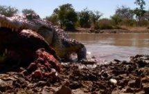 National Geographic. Самые опасные животные мира - Самые опасные животные Амазонии (World's Deadliest Animals - Amazon)