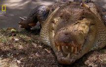National Geographic. Самые опасные животные мира - Опасные обитатели Северной Америки (World's Deadliest Animals - North America)