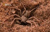 National Geographic. Самые опасные животные мира - Когда добыча атакует (World's Deadliest Animals - When Prey Attacks)