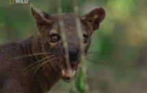 National Geographic. Самые опасные животные мира - Опасная команда Центральной Америки (World's Deadliest Animals - Costa Rica)