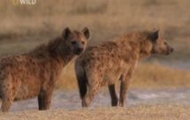 National Geographic. Самые опасные животные мира - Особо опасные (World's Deadliest Animals - Nature's Most Wanted)