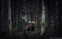National Geographic. Дикое меню - Жизнь без отходов (Wild menu - Waste not, want not)