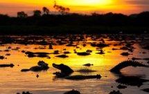 National Geographic. Неизвестная Бразилия: вечное противостояние Пантанала (Secret Brazil - Wet Pantanal)