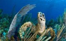 National Geographic. Секретный кубинский риф