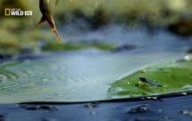 National Geographic. Дунай: Европейская Амазонка. От Черного леса до Черного моря