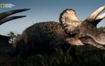 National Geographic. Тираннозавр: Чемпион по выживанию