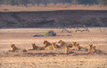 National Geographic. Африканские охотники - 8 серия