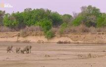 National Geographic. Африканские охотники - 18 серия