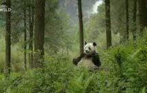 National Geographic. Затерянные царства Китая - 3 серия