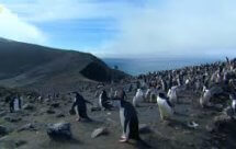National Geographic. Дикая природа Чили - 1 серия