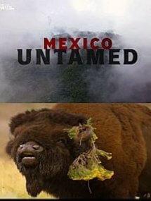 Непокорная Мексика