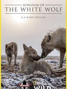 Королевство белого волка