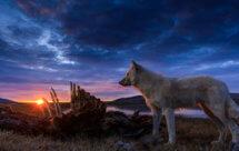 National Geographic. Королевство белого волка - 1 серия
