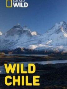 Дикая природа Чили