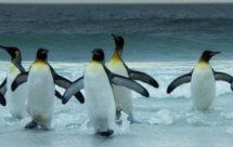 National Geographic. Дикая природа Чили - 2 серия
