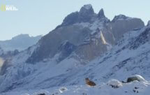 National Geographic. Дикая природа Чили - 3 серия