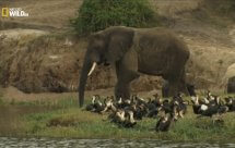 National Geographic. Невероятная Африка. Сокровища Восточного Конго (Extraordinary Africa. The treasures of eastern Congo)