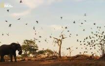 National Geographic. Дикие места Африки. Рожденные выживать (Africa's wild side. Born to survive)