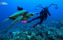 National Geographic. Море надежды. Подводные сокровища Америки (Sea of Hope. America's Underwater Treasures)